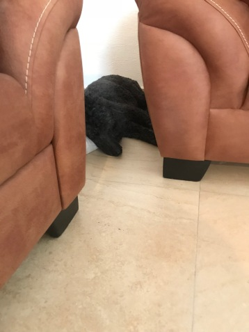 Hiding behind the sofas